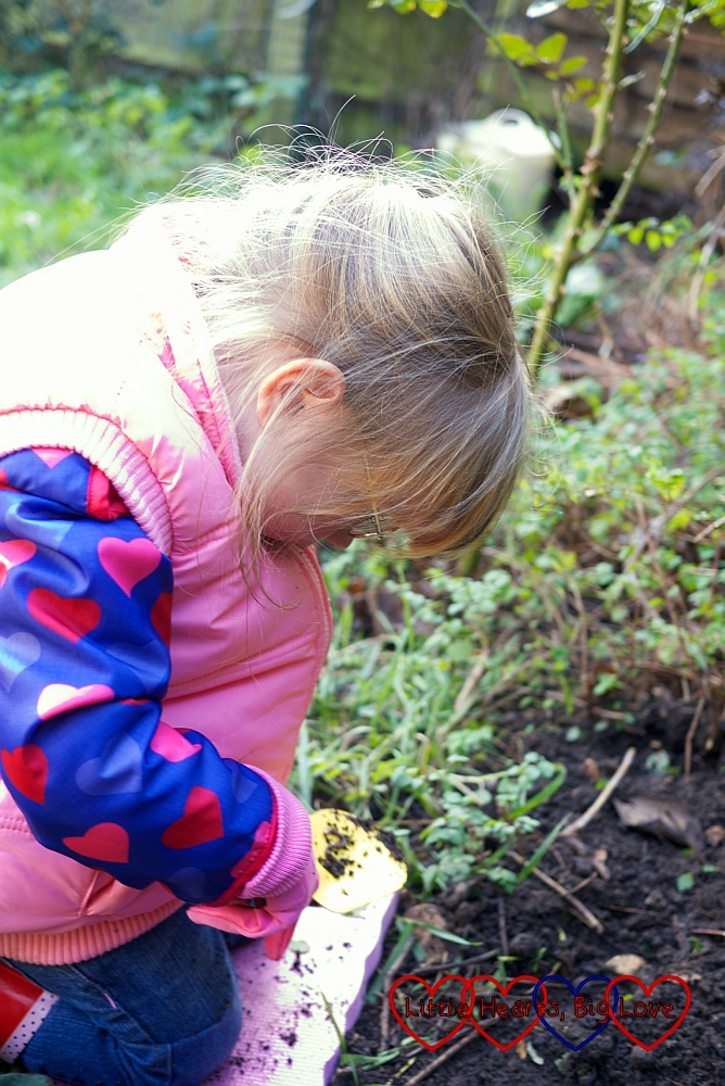 Planting Sophie's rose - Little Hearts, Big Love