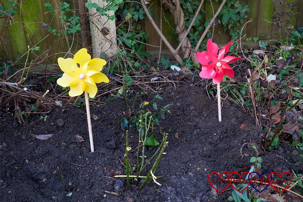 Planting Sophie's rose - Little Hearts, Big Love