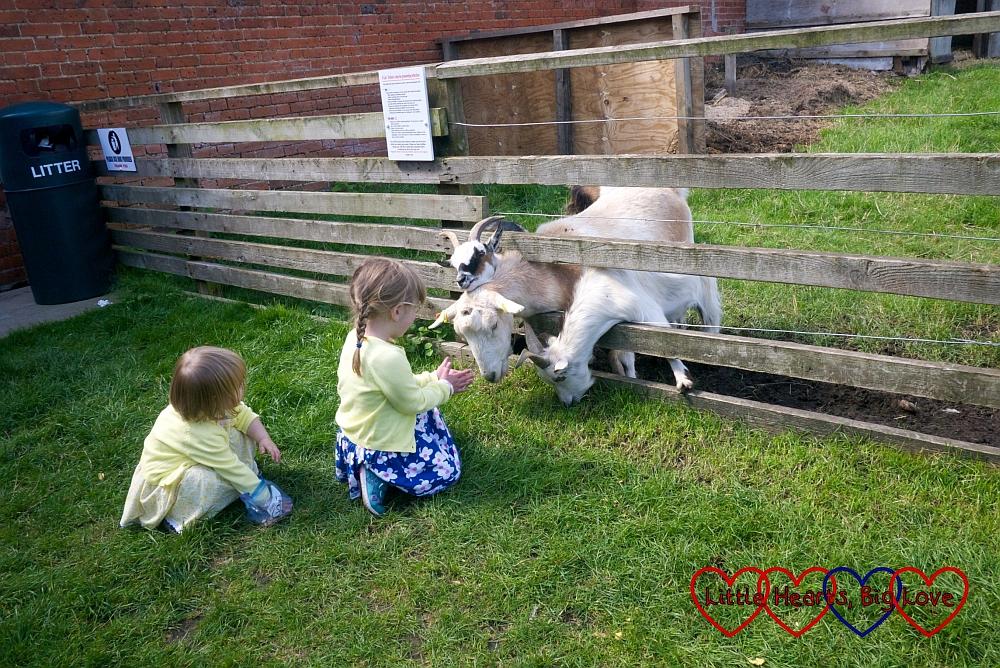 Feeding the goats at Langleybury Children's Farm - Little Hearts, Big Love