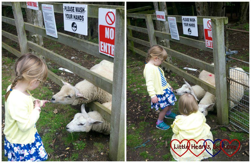 Feeding the sheep at Langleybury Children's Farm - Little Hearts, Big Love