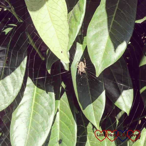 Spider webs - A walk along the river - Little Hearts, Big Love