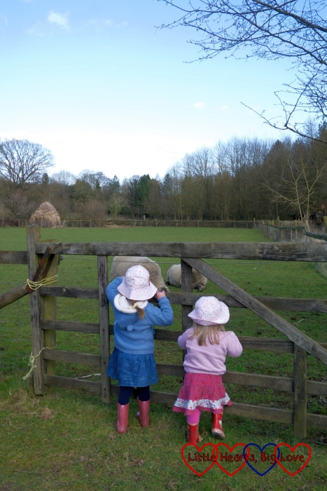 Saying hello to the sheep - Easter fun at Chiltern Open Air Museum - Little Hearts, Big Love