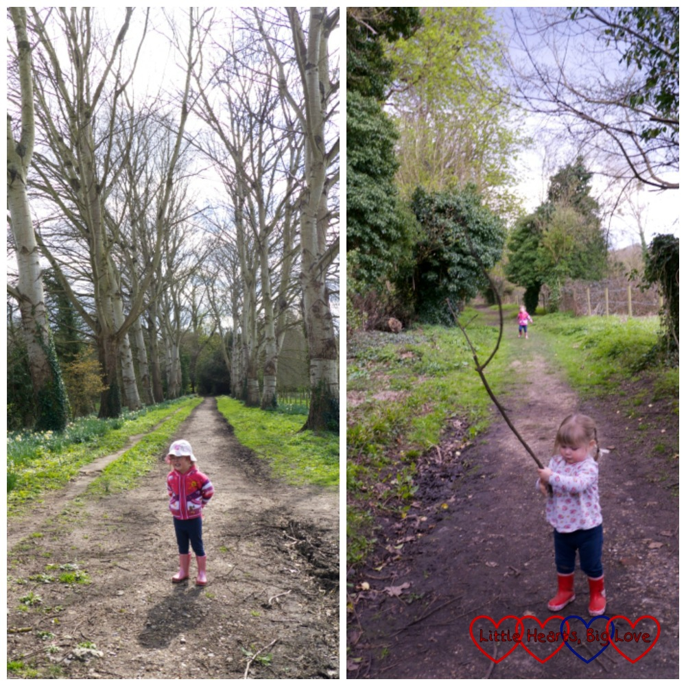 Picking up sticks and walking along a tree-lined avenue at Ankerwycke
