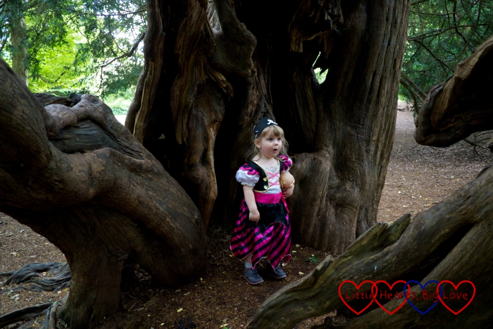 Sophie in her pirate costume standing inside the trunk of the yew tree
