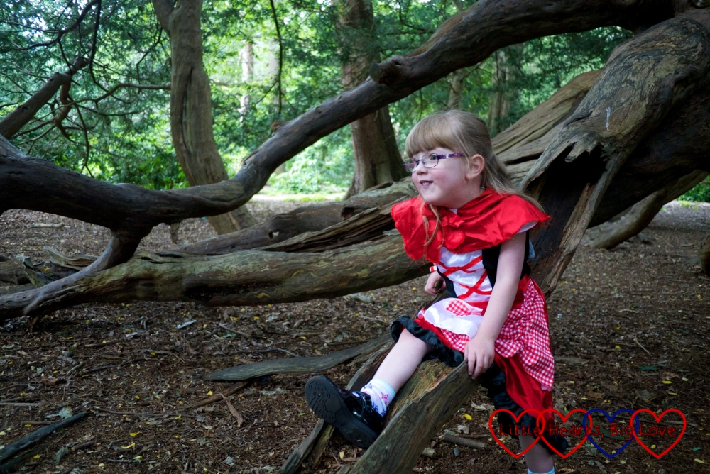 """Jessica in her Red Riding Hood costume sitting on the """"slide"""" in the yew tree"""