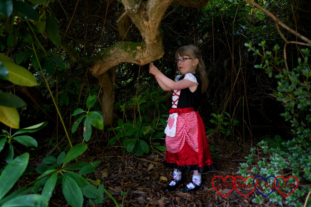 Jessica in her Little Red Riding Hood costume standing inside one of the gaps in the bushes looking for the Big Bad Wolf