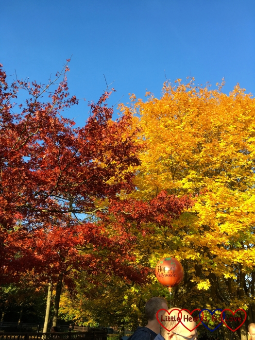 Two trees with red and yellow leaves