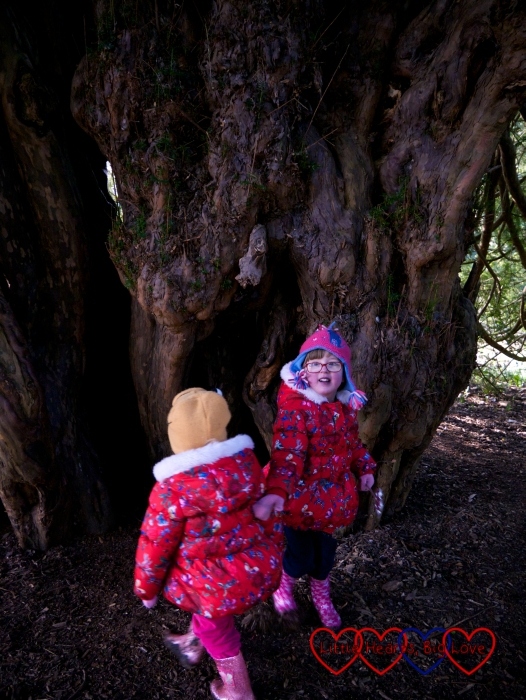 Jessica and Sophie taking a closer look at the Ankerwycke Yew
