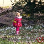 Seeing the snowdrops at Ankerwycke