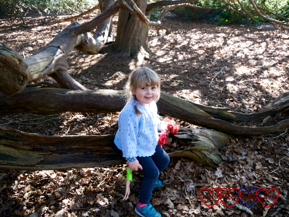 Sophie sitting on a tree branch at Langley Park