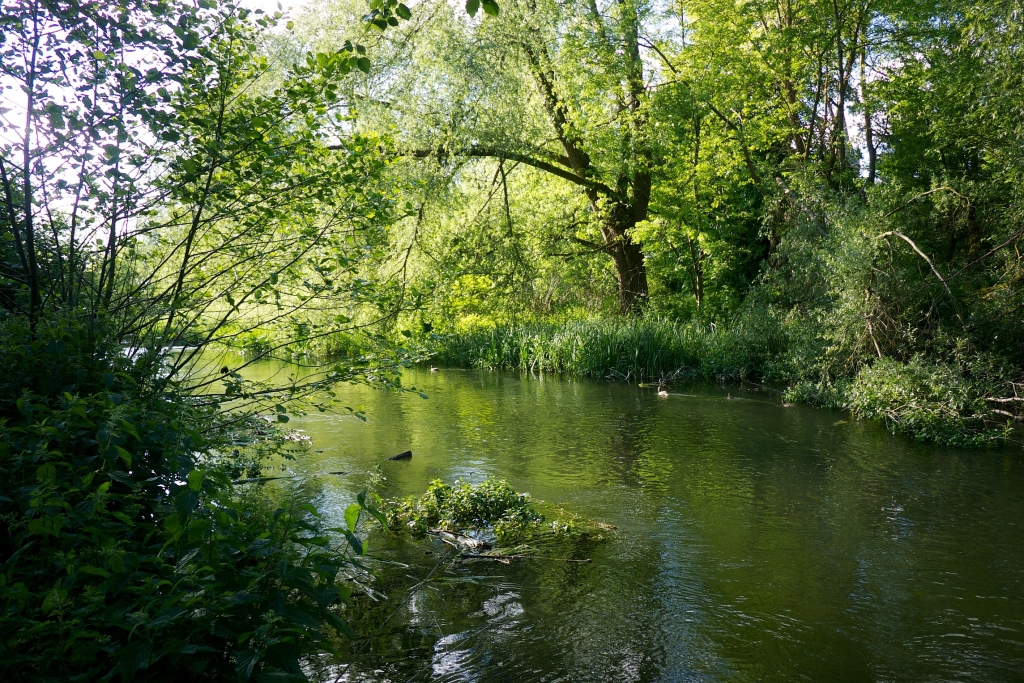 The view along the river with trees either side