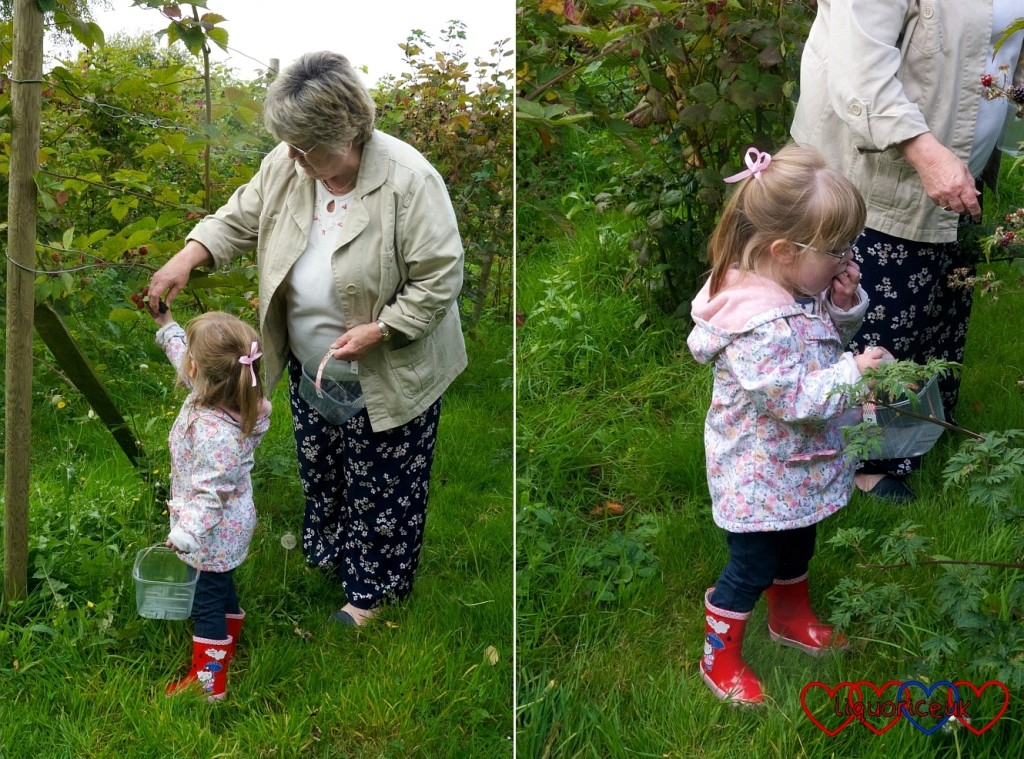 Blackberry picking - Little Hearts, Big Love