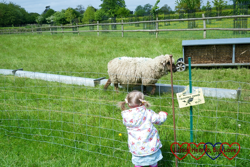 Seeing the sheep at the Chiltern Open Air Museum - Little Hearts, Big Love