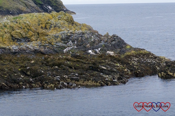 Seals sunbathing on Kitterland, Isle of Man - Stepping back in time at Cregneash village - Little Hearts, Big Love