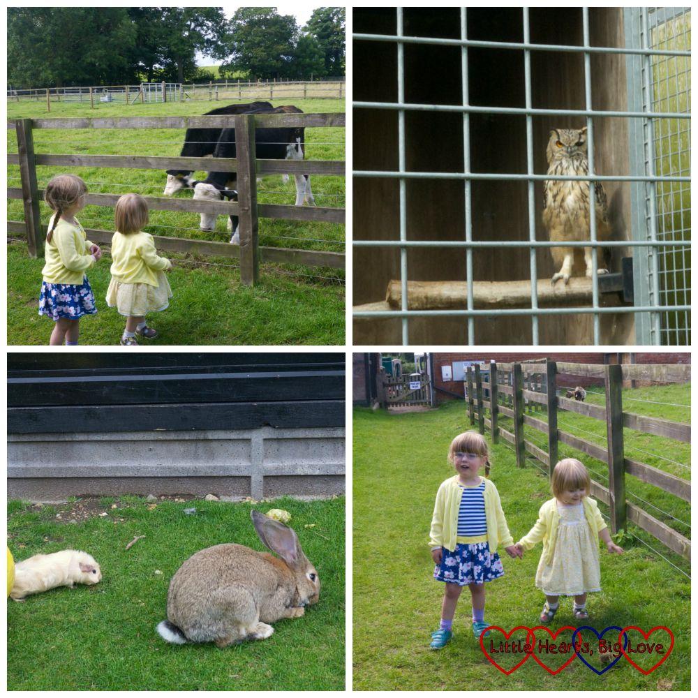 Animals at Langleybury Children's Farm - Little Hearts, Big Love