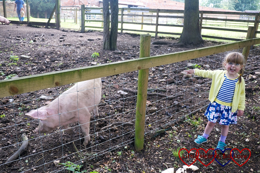 Watching the pigs at Langleybury Children's Farm - Little Hearts, Big Love