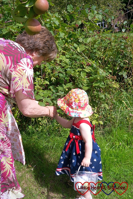 Sophie helping Grandma to pick blackberries