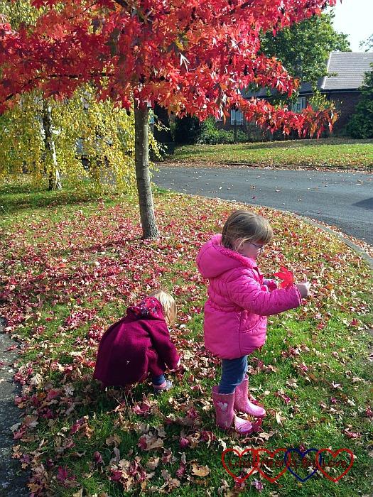 Silent Sunday 25/10/15 - Little Hearts, Big Love
