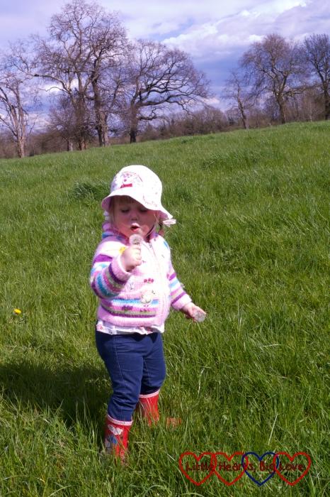 Blowing dandelion clocks - The Friday Focus 15/04/16