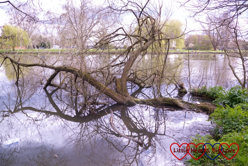 Walking along the river at Ankerwycke