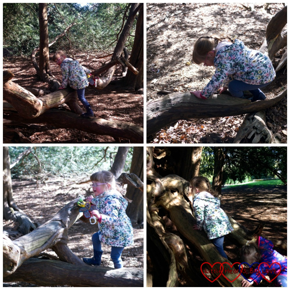 Climbing trees in the Temple Gardens at Langley Park