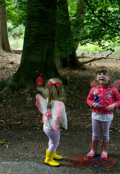 Finding a fairy house in a tree
