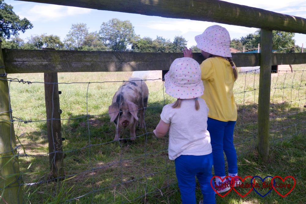 Jessica and Sophie watching one of the pigs