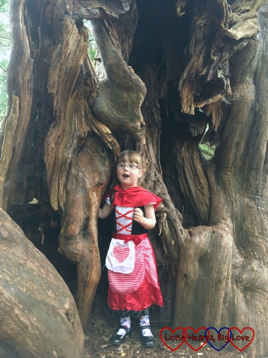 Jessica in her Red Riding Hood costume standing inside the trunk of the yew tree