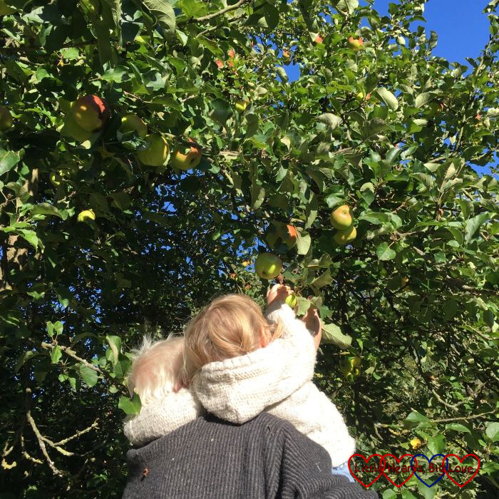 Grandad lifting Sophie up so she can pick apples from the tree