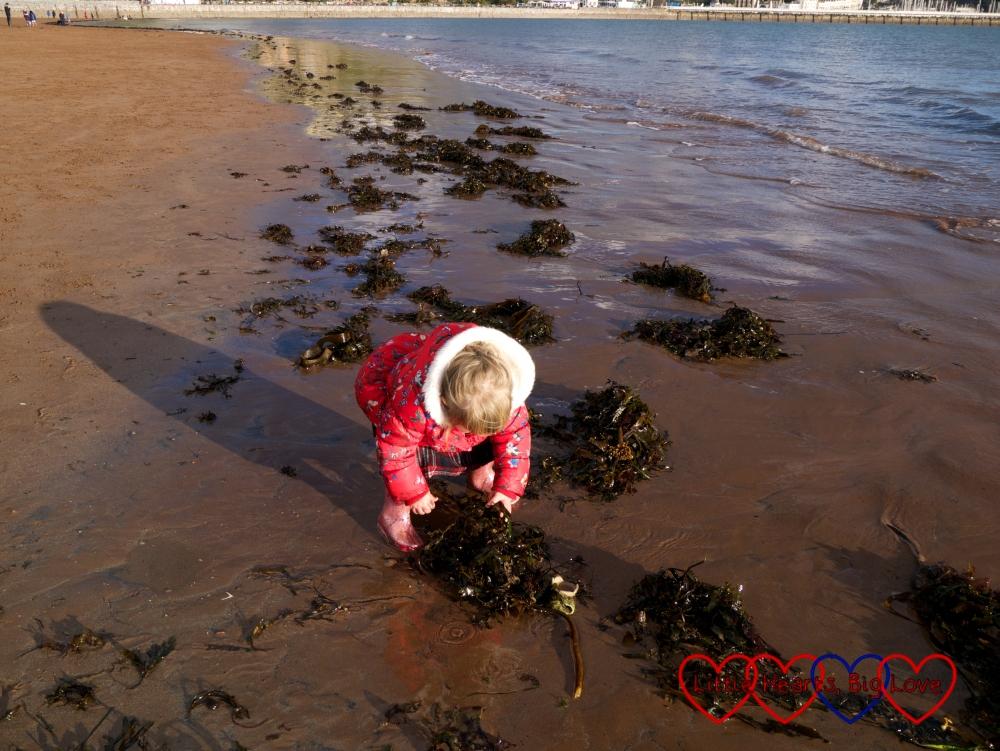 Sophie picking up seaweed at Torquay beach