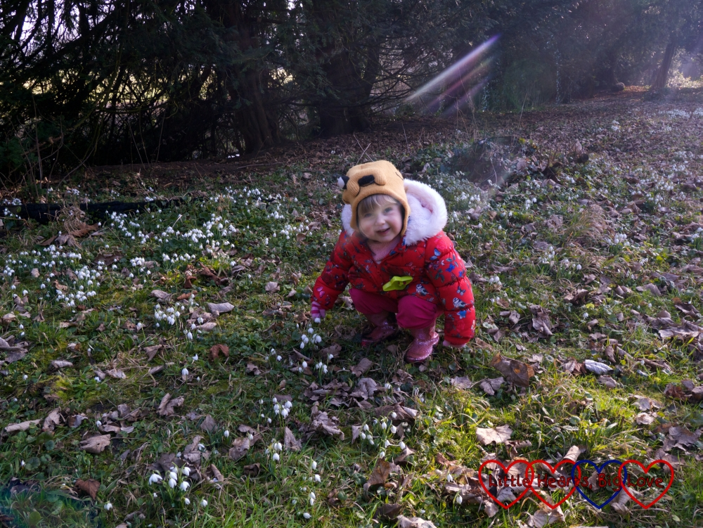 Sophie looking at the snowdrops at Ankerwycke