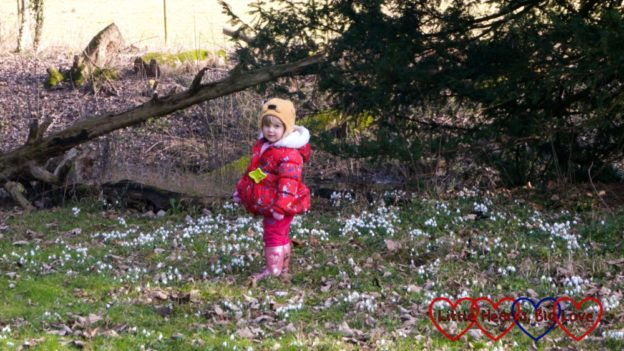 Sophie standing amongst the snowdrops at Ankerwycke