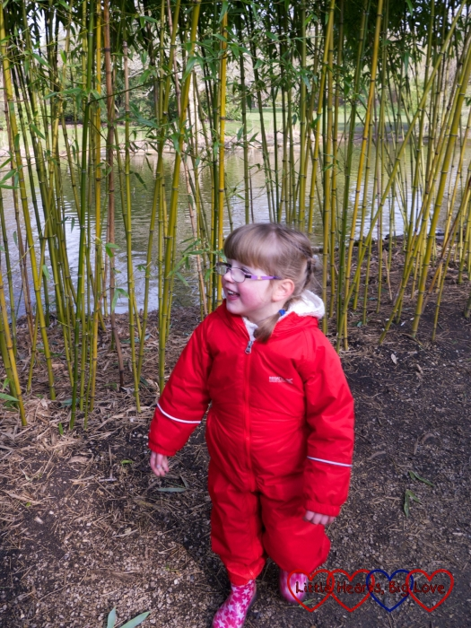 Jessica wandering near the bamboo at the lake at Cliveden