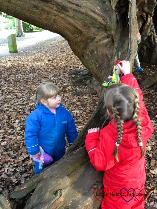 Jessica and Sophie sliding their toys down the yew tree
