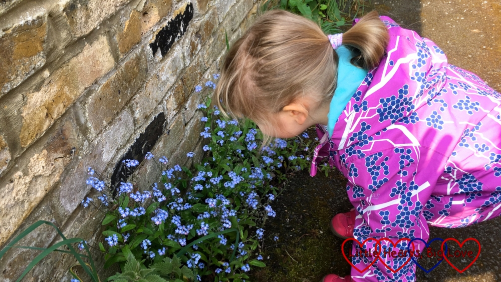 Sophie looking at some forget-me-nots