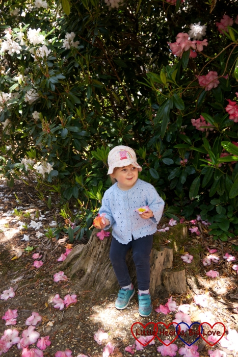 Sophie sitting on a tree trunk in amongst the rhododendrons at Langley Park