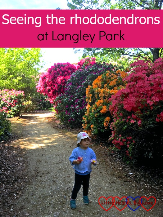 """Sophie standing next to some rhododendrons at Langley Park - """"Seeing the rhododendrons at Langley Park"""""""