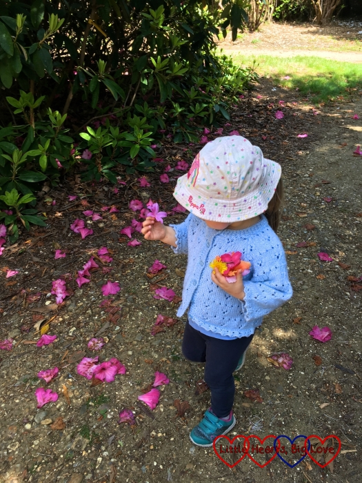 Sophie picking up fallen rhododendron blooms