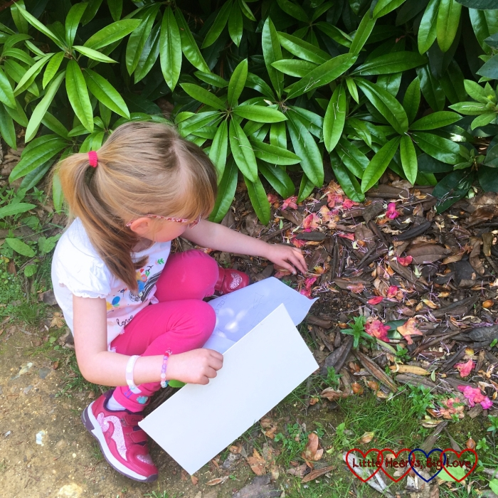 Jessica picking up some rhododendron blooms from the ground