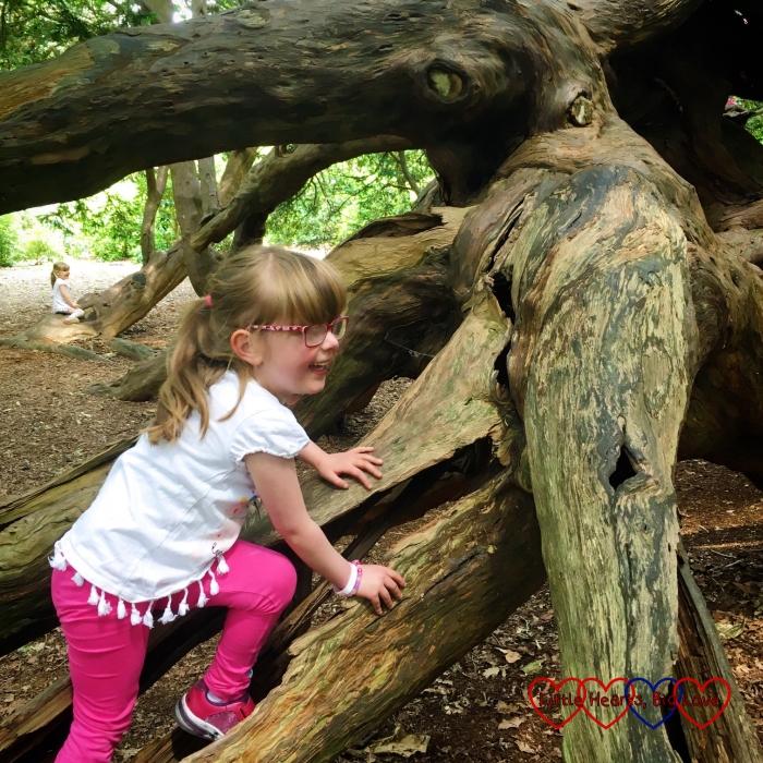 Jessica climbing her favourite tree