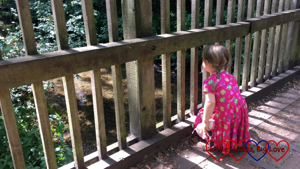 Sophie looking down into the stream from the bridge to spot which stick appears first in her game of Poohsticks