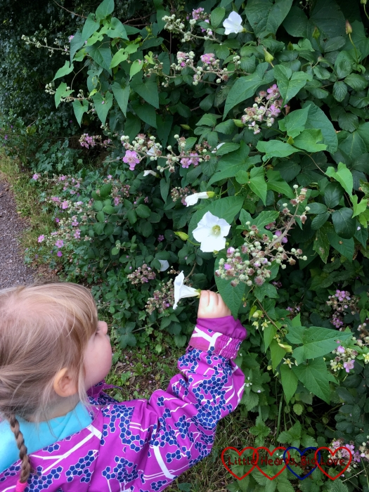 Sophie popping bindweed flowers