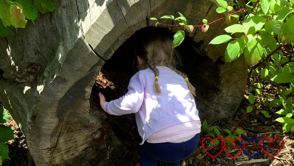 Sophie looking inside a hollowed out log at Legoland