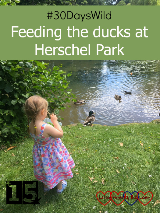 Sophie feeding the ducks at Herschel Park (#30DaysWild)