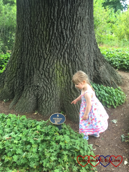 Sophie looking at one of the signs next to an oak tree