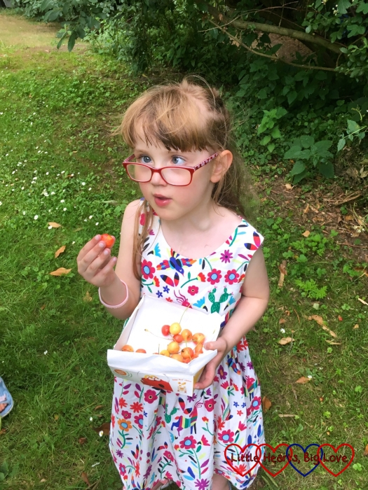 Jessica sampling one of the freshly-picked cherries
