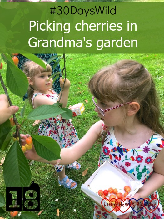 "Jessica and Sophie picking cherries from the cherry tree in Grandma's garden - ""#30DaysWild - Picking cherries in Grandma's garden"""