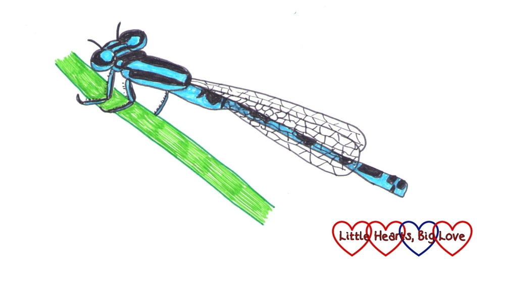 A drawing of a damselfly