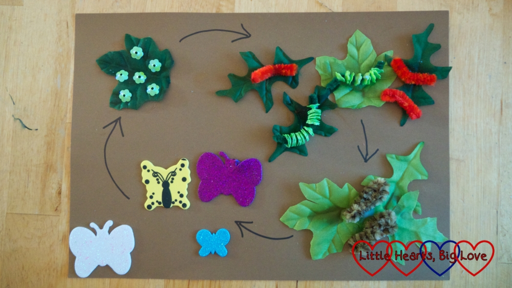 A butterfly life cycle picture made from leaf shapes, pipe cleaners, butterfly stickers and sequins