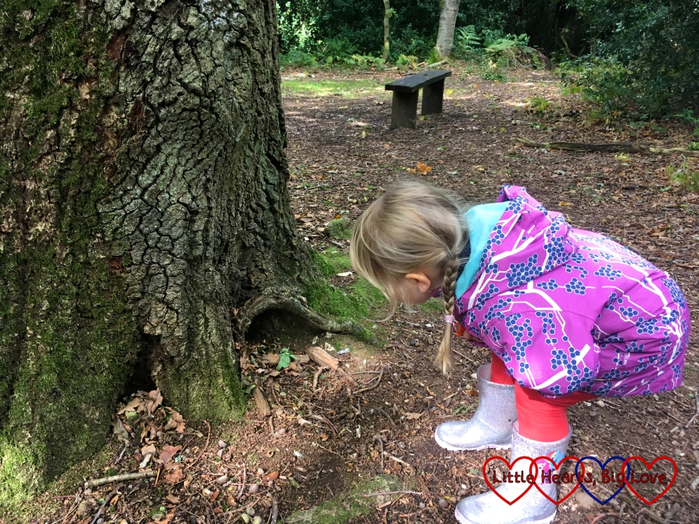 "Sophie looking at a ""fairy hole"" at the bottom of a tree"